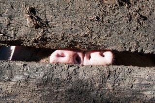 Elevage de porcs dans le Vercors