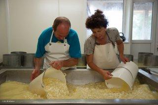 Fabrication du fromage Bleu du Vercors Sassenage, sortie du caillé. Ferme de Roche Rousse à Saint Martin en Vercors.