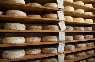 Cave à fromage de Bleu du Vercors Sassenage à la Ferme de la Grand Mèche à Lans en Vercors.