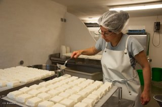 Travail en fromagerie. Salage des fromages de brebis. Ferme Bouclette et Compagnie à Saint Martin en Vercors