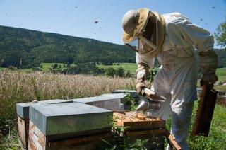 L'apiculteur visite ses ruches. Ferme La Butineuse à Villard de Lans
