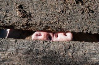 Elevage de porcs et charcuterie artisanale à Saint André en Royans