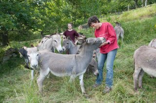 Elevage d'ânes Sarde de Camille Ristori