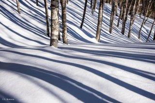 Hauts-plateaux du Vercors. Sous bois d'une Hêtraie en hiver. Isère