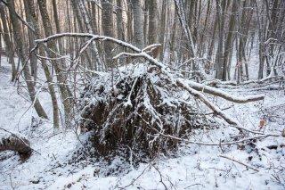 Chablis dans une Hêtraie en hiver. Forêt du Trièves, Isère