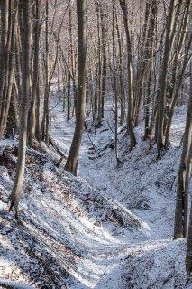 Combe dans une Hêtraie. Forêt du Trièves, Isère