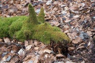Branche morte recouverte de mousse. Forêt du Trièves. Isère