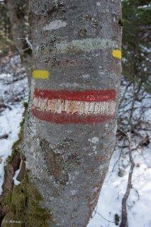 Balisage forestier et de sentier de randonnée sur un Hêtre. Forêt du Trièves