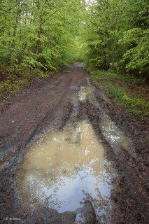Une flaque d'eau sur une piste forestière. Forêt du Trièves, Isère