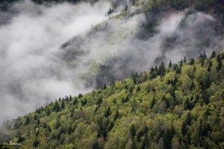 Hêtraie sapinière sur les versants de l'Obiou à Châtel en Trièves. Isère