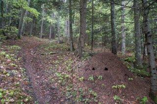 Fourmilière le long d'un sentier. Forêt du Trièves, Isère