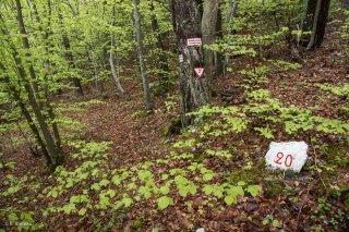 Borne forestière marquant les limites des parcelles. Forêt du Trièves, Isère