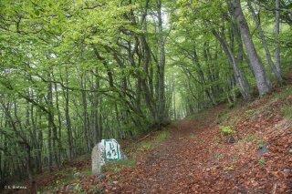 Un sentier qui monte au Piquet de Nantes traverse une hêtraie