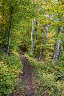 Un sentier traverse une hêtraie, à l'automne dans le Trièves. Isère