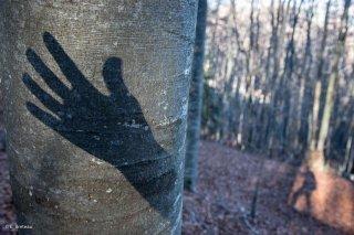 Jeux d'ombres dans une forêt du Trièves. Isère