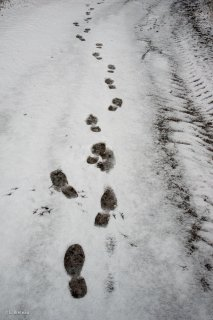 Empreintes de pas dans la neige. Trièves, Isère