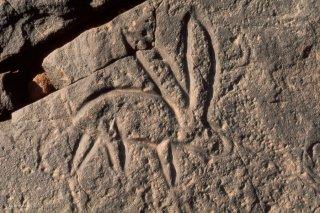 Gravure rupestre. représentation d'un lapin