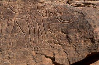 Gravures rupestres. Représentation d'un éléphant et d'un éléphanteau