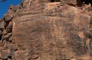 Gravures rupestres. Rhinocéros et son petit
