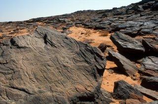 Gravures rupestres, représentations de bovins