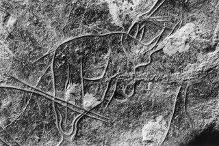 Gravure rupestre représentant un Rhinocéros dans l'oued In Aramas