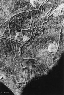 Gravures rupestres représentant un Rhinocéros et une gazelle?