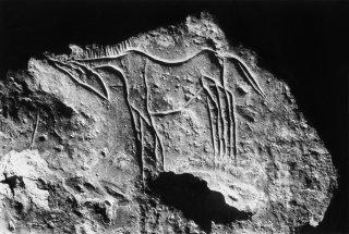 Gravure rupestre. Représentation d'un cheval