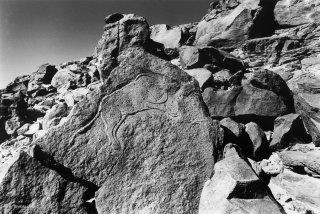Gravure rupestre représentant un bovin