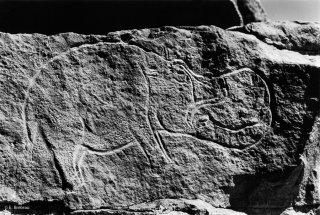 Gravure rupestre représentant un hippopotame dans l'oued Imrawen