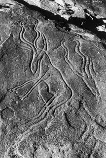 Gravure rupestre représentant une gazelle