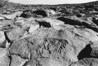 Gravure rupestre représentant des mouflons ? à Tin Amutin