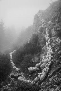 Montée à l'alpage du Châtel à Mens en Isère
