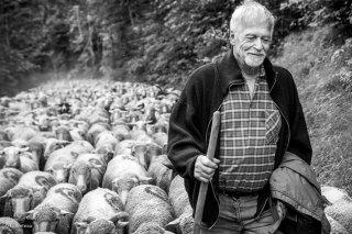 Michel Poncet, éleveur à Lavaldens. Isère