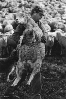 Pascal, berger au col d'Allos soigne une brebis qui a la pate cassée