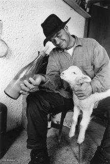 Pascal, berger dans le Vercors, donne le biberon à une agnelle