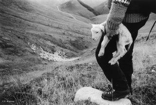 François, berger à la Salette en Isère. Naissance d'un agneau en fin de saison