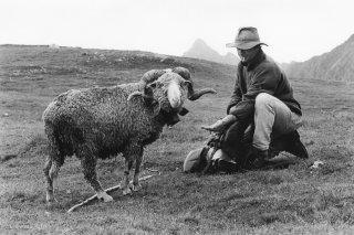 Pascal, berger dans le Beaufortin avec son mouton meneur