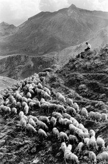Matthieu, berger dans le Champsaur. Hautes-Alpes