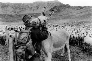Daniel, berger dans le Champsaur. Hautes-Alpes