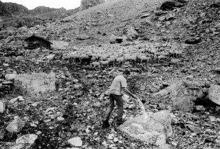 Henri, éleveur dans le Valgaudemar met du sel à ses brebis en alpage. Hautes-Alpes