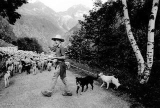 Mathieu, berger dans le Valgaudemar. Hautes-Alpes