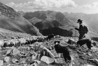 Belou, berger dans le Champsaur. Hautes-Alpes