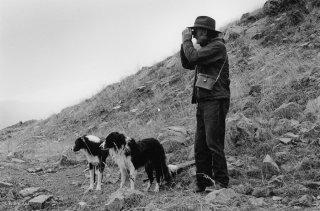 Belou et ses chiens, berger dans le Champsaur guette son troupeau. Hautes-Alpes