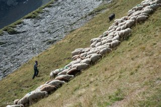Alain et son troupeau dans le Valgaudemar. Hautes-Alpes