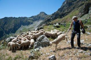 Henri, éleveur dans le Valgaudemar soigne ses brebis. Hautes-Alpes