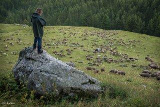 Max, berger sur l'alpage de Valdemars dans les Alpes de Haute Provence