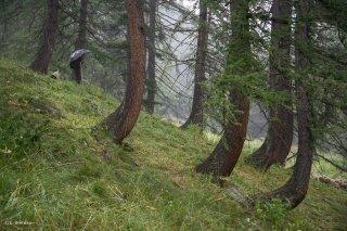 Max, berger sous l'orage, sur l'alpage de Valdemars dans les Alpes de Haute Provence
