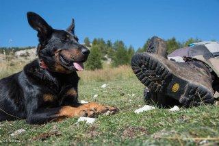 Tony, berger sur l'alpage de Méailles dans les Alpes de Haute Provence fait une pause avec son chien Beauceron