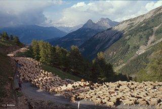 Transhumance des frères Menut, descente du col d'Allos. Alpes de Haute Provence