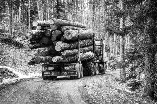 Camion grumier en forêt de Chichilianne. Avril 2013
